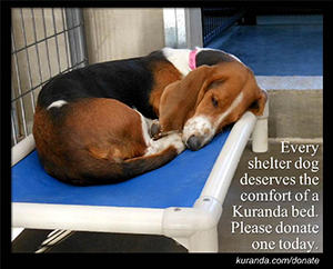Donate a Dog Shelter Bed